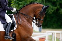 Sommacampagna-grande-weekend-di-equitazione-58cbfccf3008a4